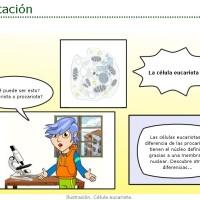 Las células: partes y clasificación