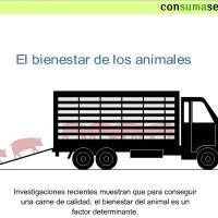 El transporte de animales