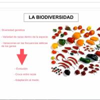 Biodiversidad CTM