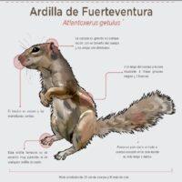 Ardilla de Fuerteventura