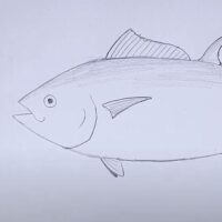 ¿cómo dibujar un atún?