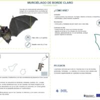 Murciélago de borde claro (Pipistrellus kuhlii)
