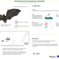 Murciélago del bosque canario (Barbastella barbastellus guanchae)