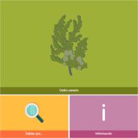HTML5: Cedro