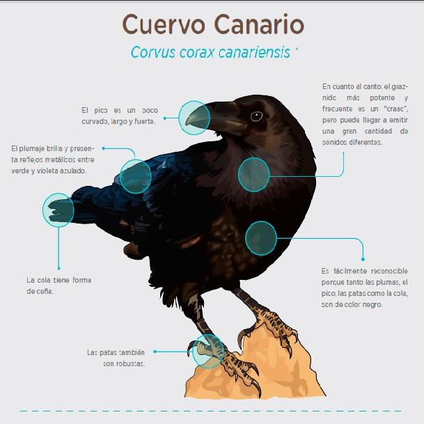 Infografía » Tipologías » Recursos educativos digitales