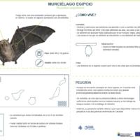 Murciélago egipcio (Rousettus aegyptiacus)