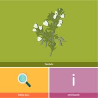 HTML5: Escobón