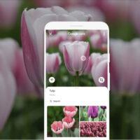 Google Lens: Busca lo que ves