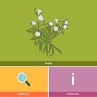 HTML5: Guaydil