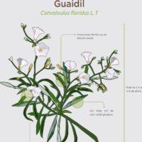 Guaydil