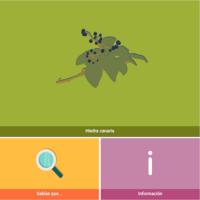 HTML5: Hiedra canaria