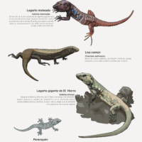Lámina: Reptiles de Canarias