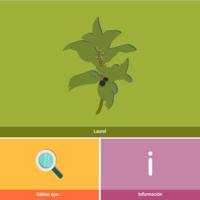HTML5: Laurel
