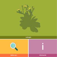 HTML5: Lechugón