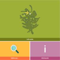 HTML5: Leña santa