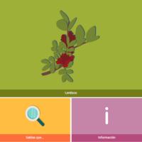 HTML5: Lentisco