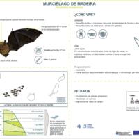 Murciélago de Madeira (Pipistrellus maderensis)