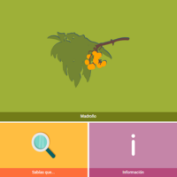 HTML5: Madroño