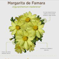 Margarita de Famara
