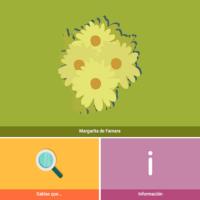 HTML5: Margarita de Famara