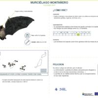 Murciélago montañero (Hypsugo savii)