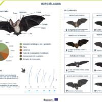 Lámina: Murciélagos de Canarias