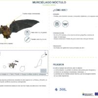 Murciélago nóctulo (Nyctalus leisleri)