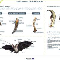 Anatomía de los murciélagos. Organismo