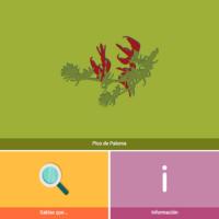 HTML5: Pico de paloma