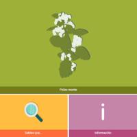 HTML5: Poleo de monte