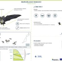 Murciélago rabudo (Tadarida teniotis)
