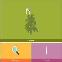 HTML5: Taracontilla