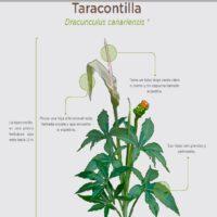 Taracontilla