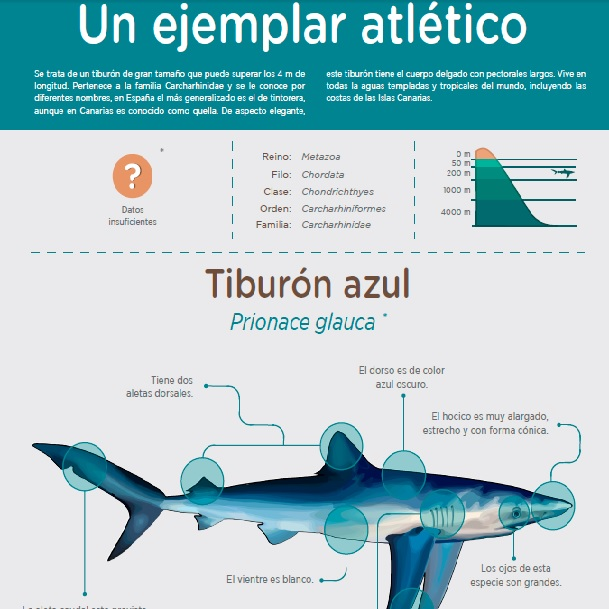 Tiburón azul » Recursos educativos digitales