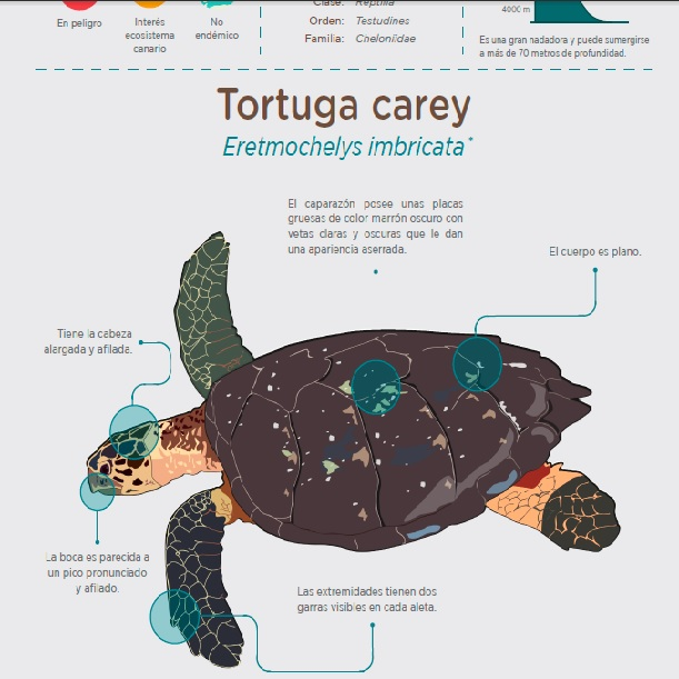 Tortuga careyPQ » Recursos educativos digitales