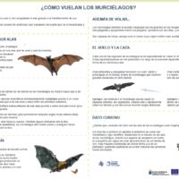 ¿Cómo vuelan los murciélagos?
