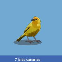 Acomola: 7 islas canarias