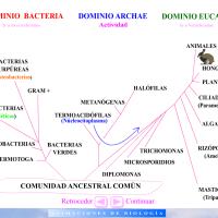 Dominios, clasificación de los seres vivos
