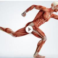 Efectos de correr en el cuerpo