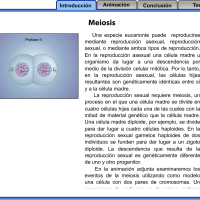Flash explicativo sobre meiosis