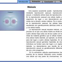 Flash explicativo sobre meiosis