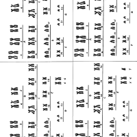 práctica para cariotipos con anomalias
