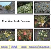 Flora de canarias