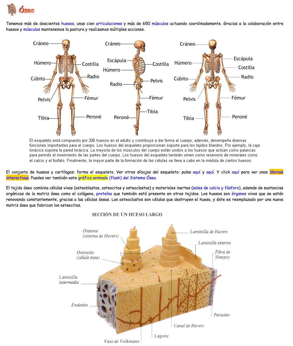 Aparatos y sistemas del cuerpo humano » Recursos educativos digitales