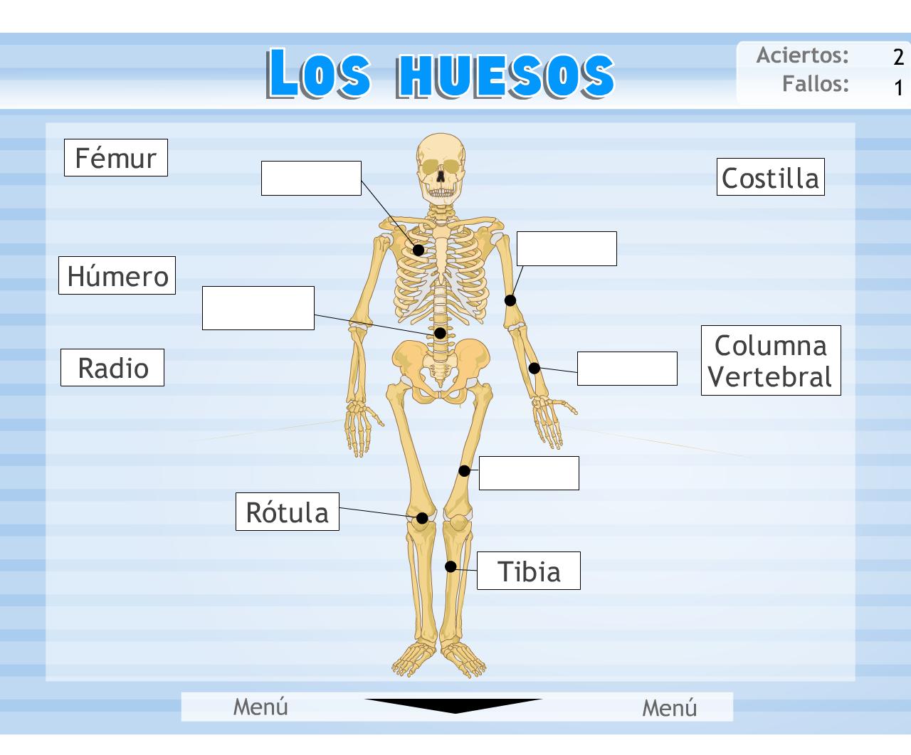 flash nuestro cuerpo » Recursos educativos digitales