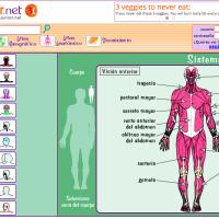 flash de atlas anatómico