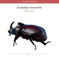 HTML5: escarabajo rinoceronte