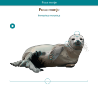 HTML5: Foca monje