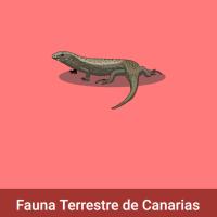 Acomola: Fauna terrestre de Canarias