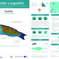 Infografía: Guelde